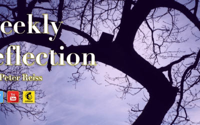 Weekly Reflection by Peter 20th Nov